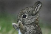 RABBITS and BUNNIES / So cute and CRAZZZZY!