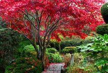 Garden ideas / by Bonnie Hall