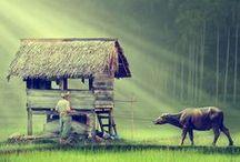 Indonesië Reizen   Nomad&Villager / Ook zo geïnspireerd door Indonesië als wij? Hier vind je onze verhalen, inspiratie, beelden en foto's.