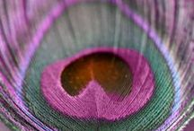 Purples / by lynn