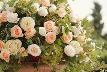 Floral / by Dorothy Miller