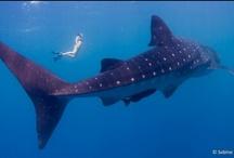 Utila Underwater