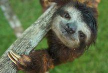 Koala Panda Sloth / by Janet Evans