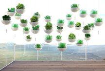 Indoor planting.