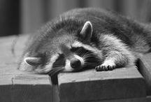 Animaux / Photos d'animaux