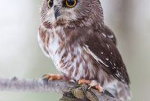 Owls and other wild animals / Owls and other wild animals