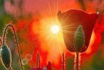 Gardening 1 / by Denise Johnson