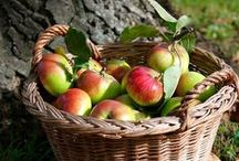autumns apple harvest