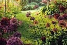 Ogrodowo... Gardens