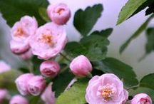 CSODÁS VIRÁGOK!!!!! / Szép képek,Virágok!!!!!!