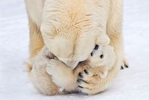 Cute Animals / I absolutely love animals so this board has lots of pins of super cute animals!