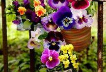 Orvokkivaasi - nettilöydöt - Pansy - Viola / Löytämäni kauneimmat Orvokki kuvat, seassa on myös omia otoksia.  Orvokit on mun lempparikukkia.