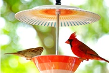 Great Bird Feeders! / Encourage the wildlife into your garden with these amazing bird feeder ideas! Why not have a go at making your own.
