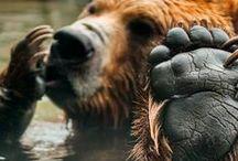 Beautiful Bears / Beautiful bears from around the world.