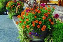 Star Gardening Tips / You don't really need a green thumb to be a star gardener.