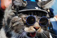 CAT / #cat #猫 #ねこ #ぬこ