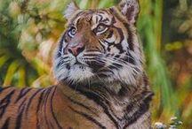 Team Tiger! / Event 2015! Terima the Sumatran Tiger arrives at the Zoo.
