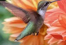 Lilletoya - Fugler - Birds.