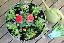 A Splash of Color in Summer / Gardening projects, tips, and tricks to make your summer a little bit brighter. / by Miracle-Gro