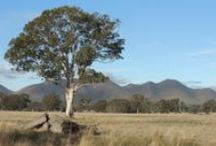 Jills pics of Australian landscape and it's animal inhabitants.