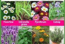 Household/Garden tips