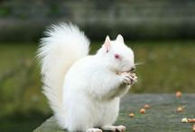 Albino animals / by Mary Donovan-Coykendall
