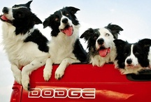 Pet Car Rides!