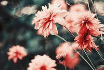 Photography / Photo