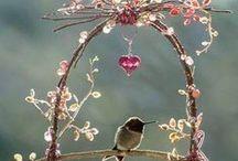 Kolibrie's en andere soorten vogels. / Over kolibrie's en andere mooie vogels.