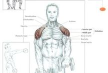 Muscle Sheets / #muscle #anatomy #men #male