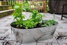 cute container gardens  / by Ashleigh Wowwow
