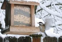 Birds, Bird Feeders & Backyard Critters