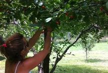 Farms & Ranches / Featuring the farms, orchards and ranches of the North Fork Valley and beyond