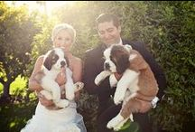 Pets in the Wedding / Including your four-legged family members in your wedding is a must!