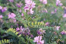 Flora around the world
