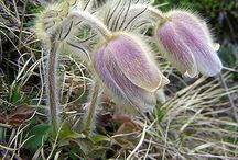 Nordic Flora | Spring