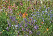 Gardening | Plants