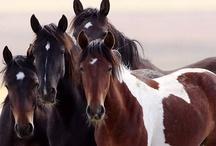 HORSES / by pia bergkrantz