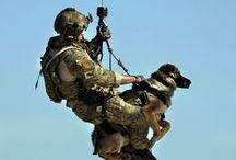Military / Airforce, marine, police, military etc.