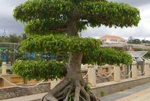 Bomen / Alle soorten