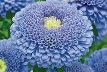 Beautiful Garden Flowers / by Audrey Updyke