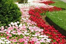 Gardening & Landscaping / Gardening design, flower display, garden features.