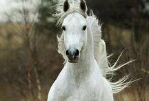 Horses / The beautiful creature, the horse
