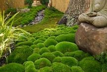 Gardening with moss / Moss conveys weathering, mystery as well as tranquil environments