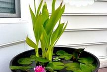 Gardening  in water containers