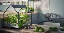 Home Garden ● Domowy Ogród / Garden ● Home Garden ● Ogród ● Domowy ogród ● Rośliny ● Vege ● World design ● Światowy design ● Światowe wzornictwo ● World dizajn ● Wzornictwo