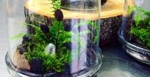 Forest Jar Terrarium ● Las w słoiku / Forest ● Forest Jar ● Las w słoiku ● Green ● Dekoracja ● Decoration ● Design ● Wzornictwo ● dizajn ● Polish dizajn ●