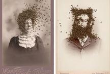 Bees/Honey/Comb