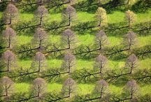Aerial Photos / by Donna Whitney