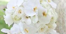 Morsiuskimput - valkoinen